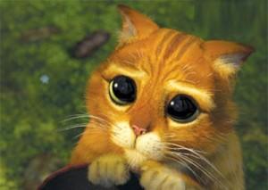 Le Chat Potté de Shrek a les pupilles dilatées à l'extrême ! Ca fait craqué non ?