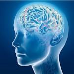Cerveau virtuel